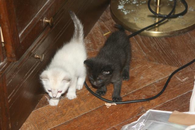 5 chatons pour bonne famille - Page 3 Photo_43