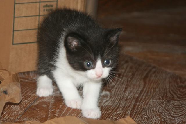 5 chatons pour bonne famille - Page 3 Photo_44