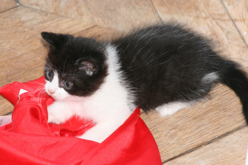 5 chatons pour bonne famille - Page 3 Photo_55