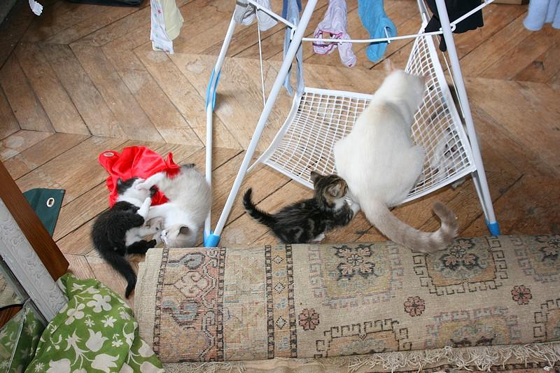 5 chatons pour bonne famille - Page 3 Photo_58
