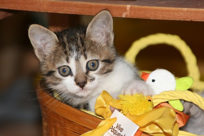 5 chatons pour bonne famille - Page 3 Photo_59