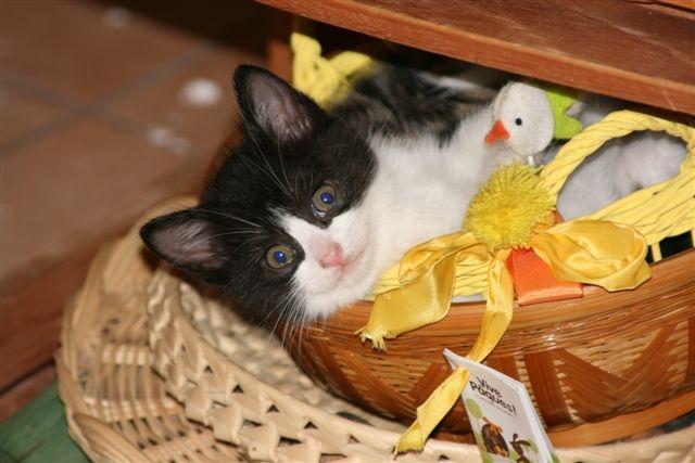 5 chatons pour bonne famille - Page 3 Photo_60