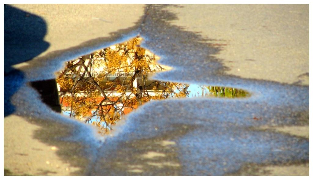 Les reflets sur l'eau Img_2510