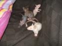 Betameche, Arthur, E.T, Stitch et Jack  (Mes ratous) - Page 4 Dsc02510