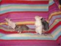 Betameche, Arthur, E.T, Stitch et Jack  (Mes ratous) - Page 4 Dsc02512