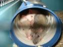 Betameche, Arthur, E.T, Stitch et Jack  (Mes ratous) - Page 4 Dsc02612