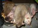 Betameche, Arthur, E.T, Stitch et Jack  (Mes ratous) - Page 4 Dsc02714