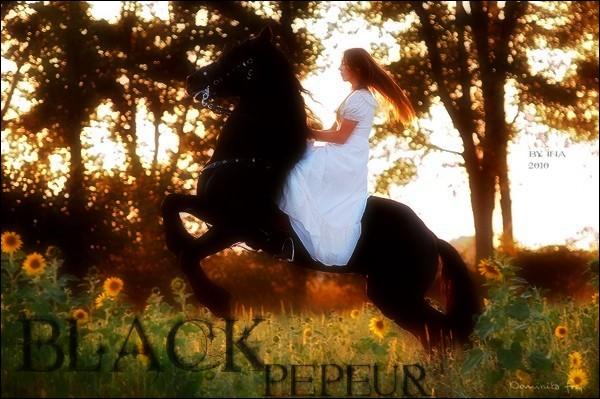 BOX DE BLACK PEPEUR Black_13