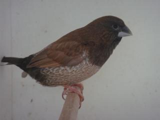 moka brun, une dénomination pour une palette de couleur Male_m10