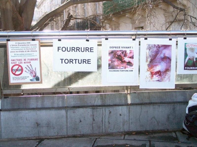 journée  contre la fourrure monptellier 10 janvier 2009 Fur_mt12