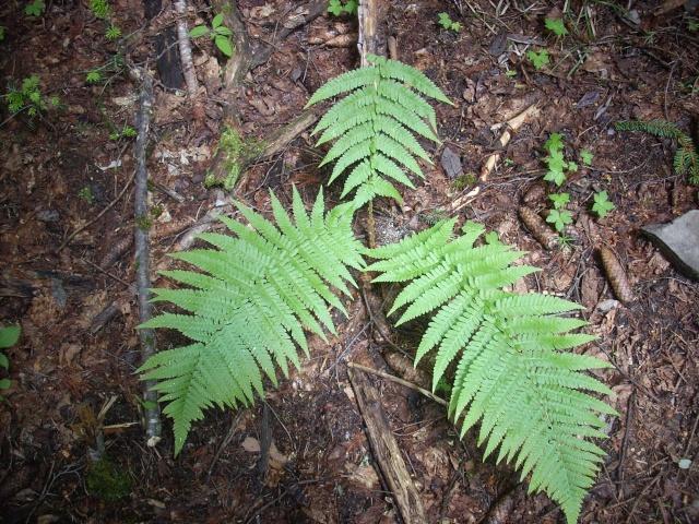 Poumon Vert en Tinée. Dscn4210