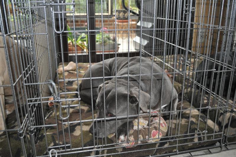 Choix de la cage/caisse de transport Dsc_0020