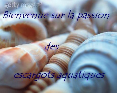 La passion des escargots aquatiques