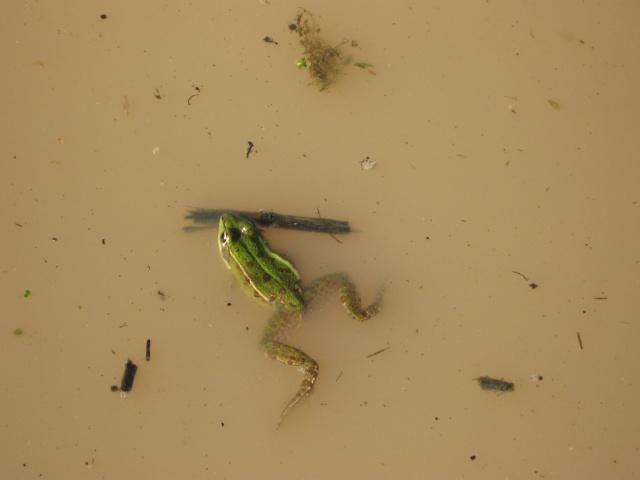 Herping du 28 Février 2009 - Salamandres et tritons . Img_0316