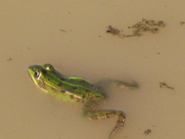 Herping du 28 Février 2009 - Salamandres et tritons . Img_0318