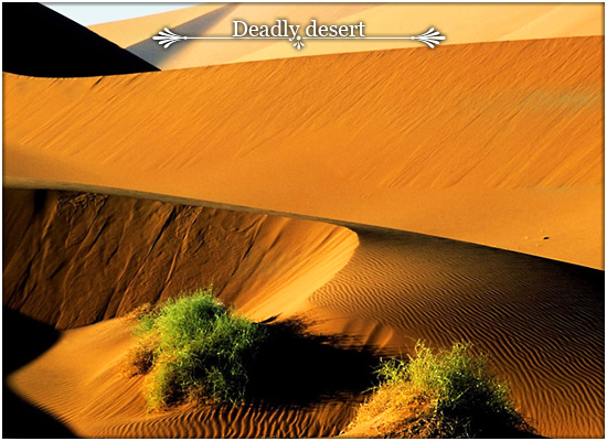 P i c t u r e . Desert10