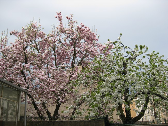 Le printemps au jardin Img_0811