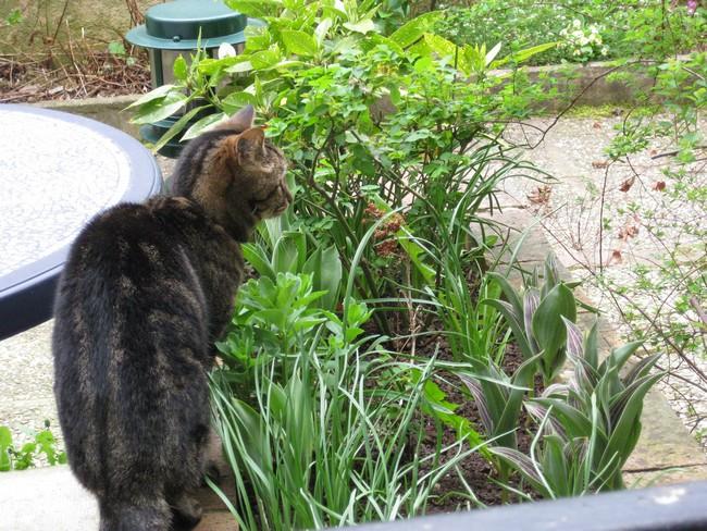 Le printemps au jardin Img_0812