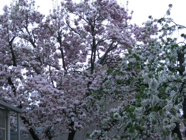 Le printemps au jardin Img_0813