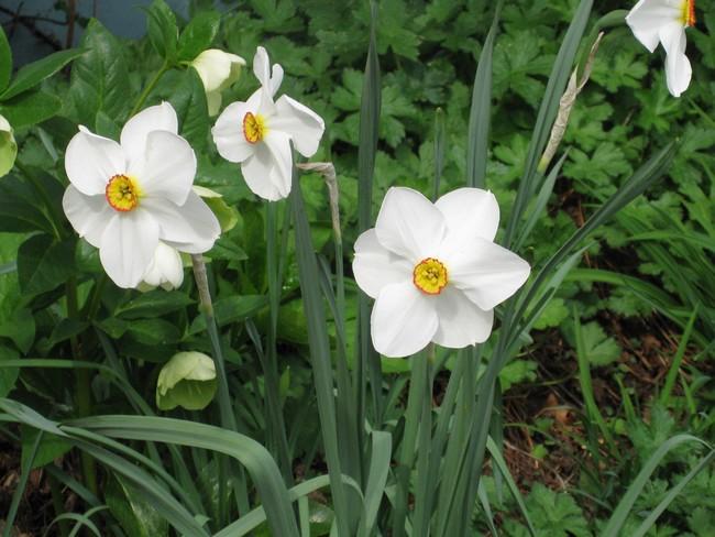 Le printemps au jardin Img_0913