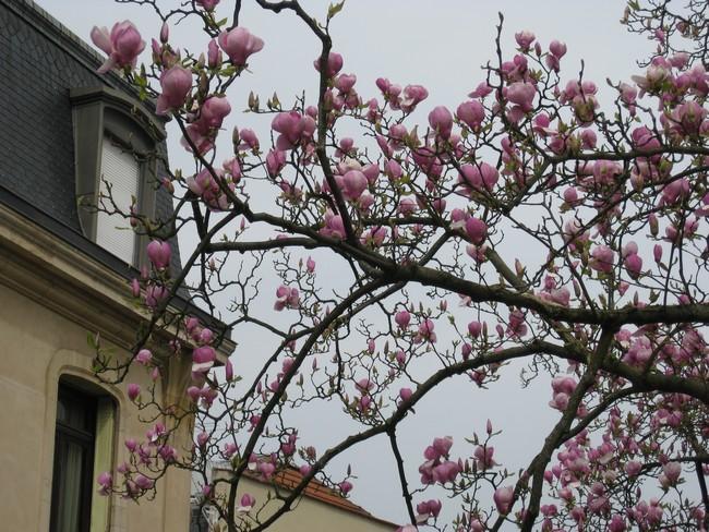 Le printemps au jardin Img_0915