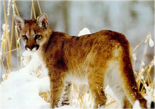 †. The CatWorld Pumas10