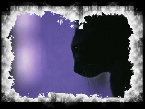 †. The CatWorld Test210