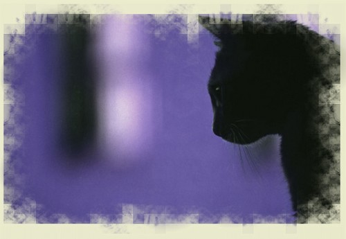 †. The CatWorld Test310