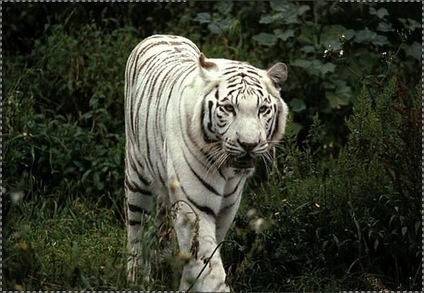 †. The CatWorld Tigre110