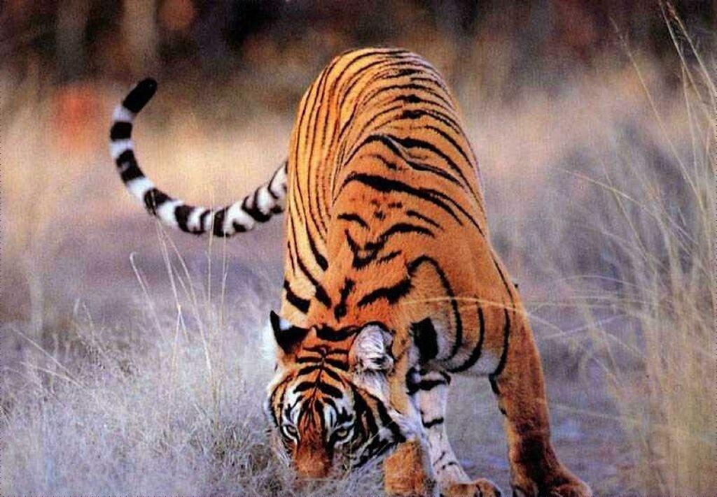 †. The CatWorld Tigre210
