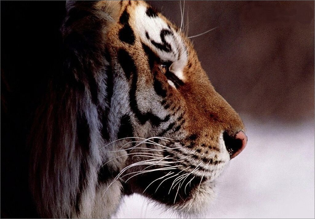 †. The CatWorld Tigre310