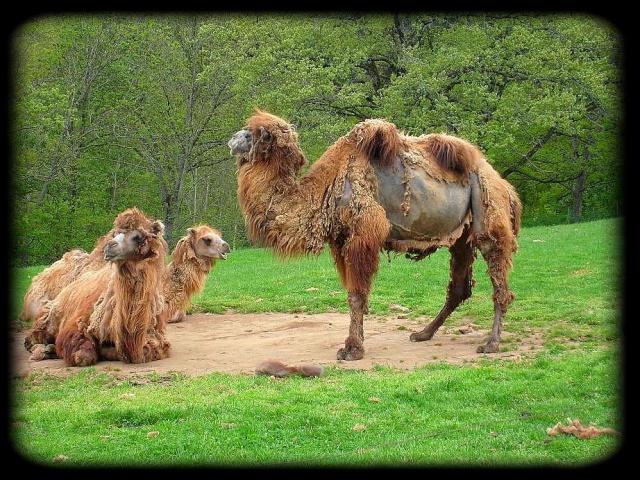 Concours photo du mois de décembre Zoo_0019