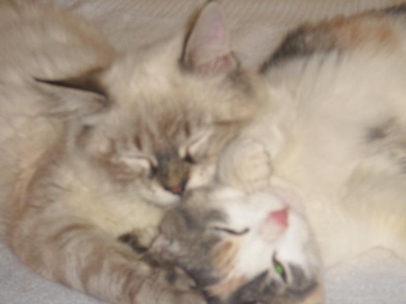 Saphyr et Athéna, attendent un foyer doux, responsables et plus que tout aimant... 08210