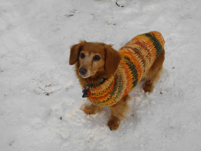 Collecte de laine pour tricotage de manteaux par la maman de Déborah Imgp0616