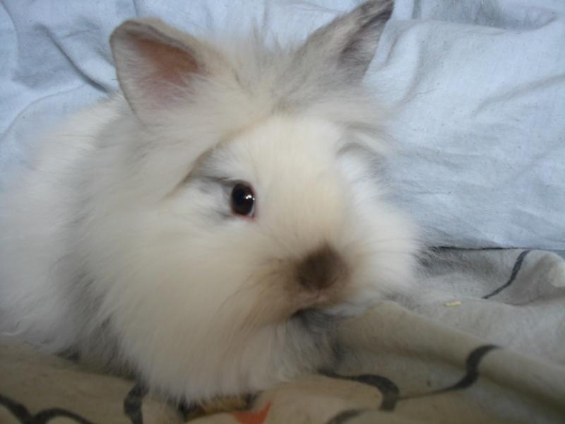 Gang de lapins Photos85
