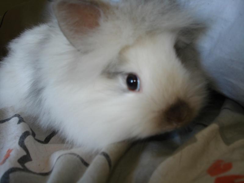 Gang de lapins Photos86