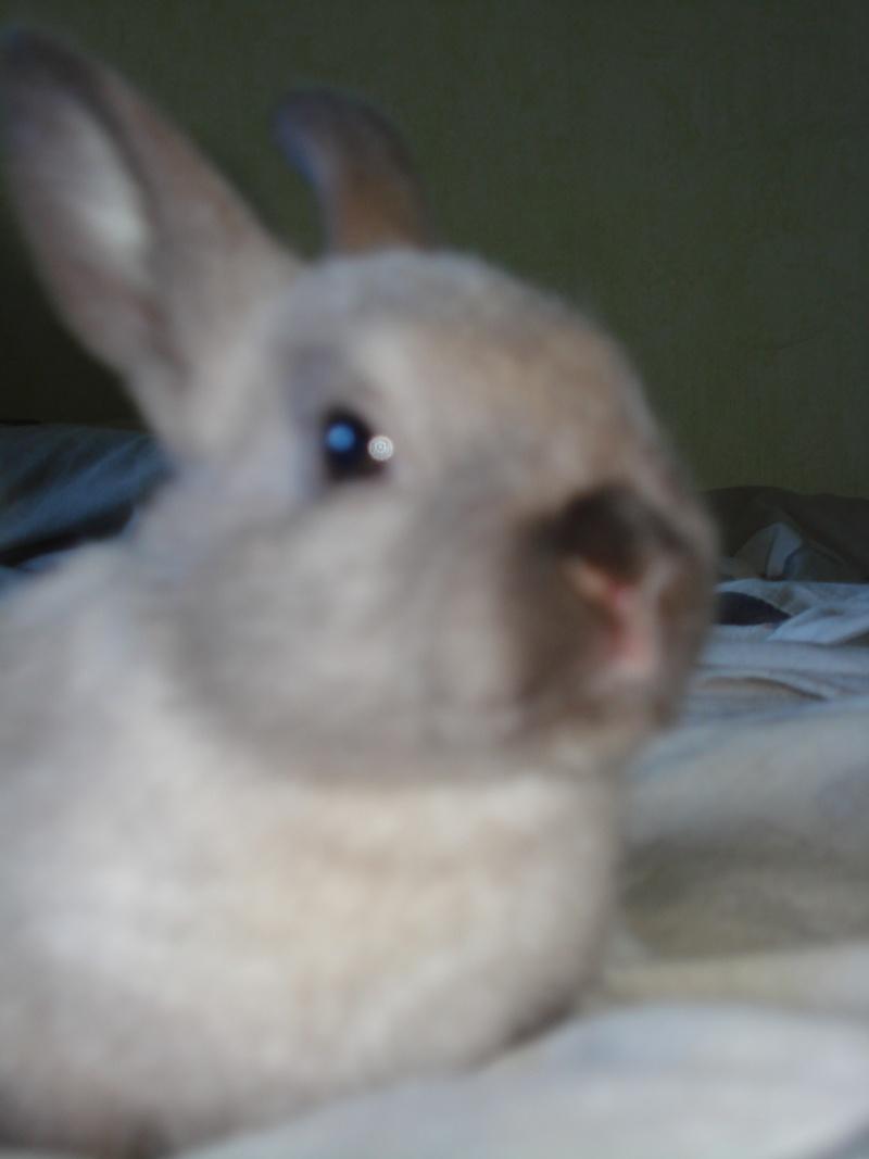 Gang de lapins Photos88