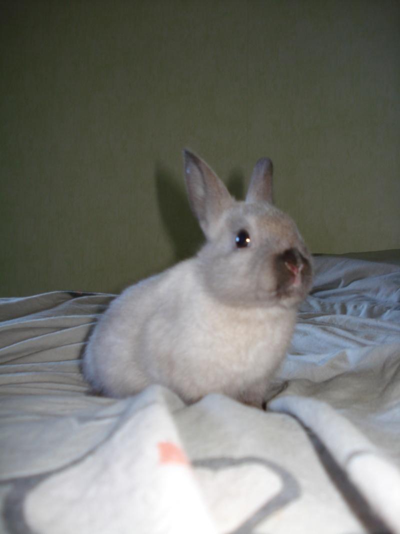 Gang de lapins Photos89