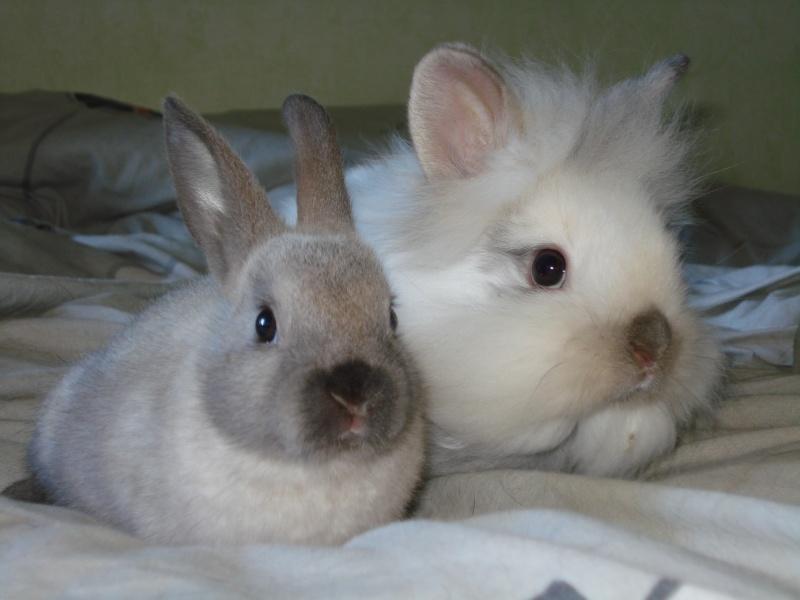 Gang de lapins Photos90