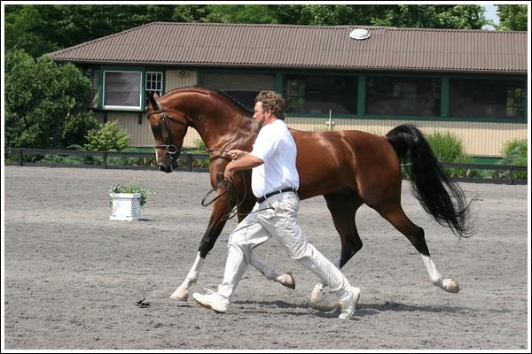 """• Mission """"création de chevaux"""". - Page 6 Vaha2010"""