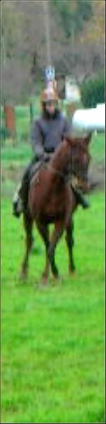 Equitation Sans_t19