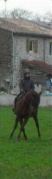 Equitation Sans_t20