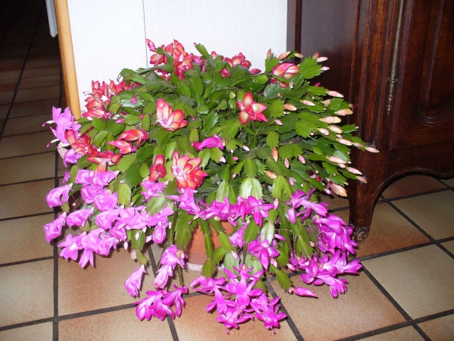Mes plantes grasses Plante10
