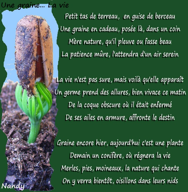 Une graine... la vie Poeme_55