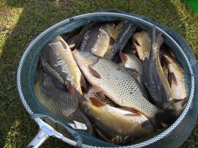 Premiers poissons de l'année Imag0010