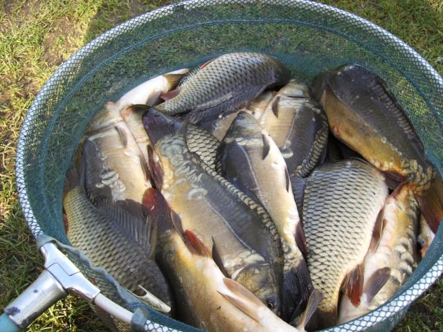 Premiers poissons de l'année Imag0011
