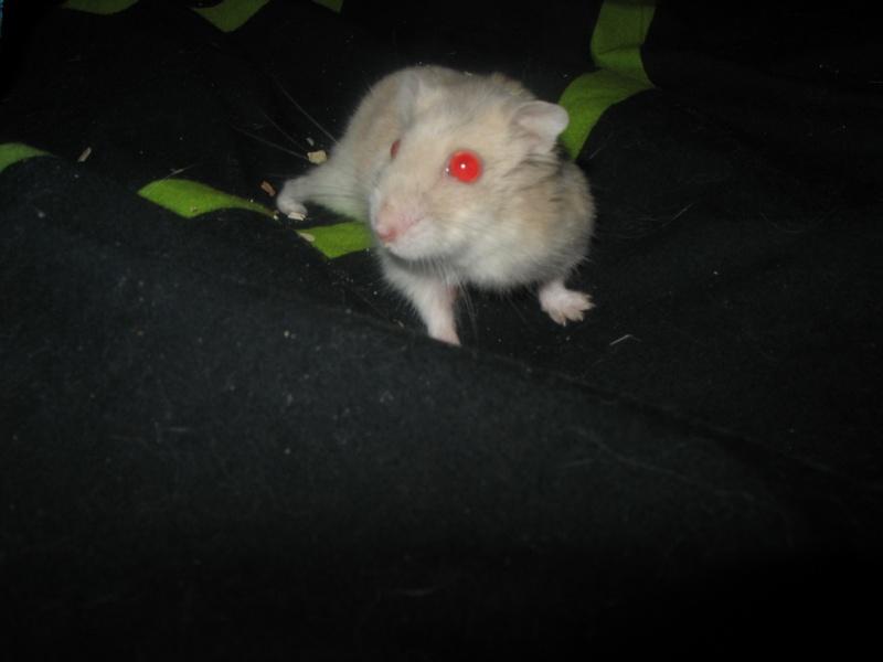 Perle, petite hamster Img_4411