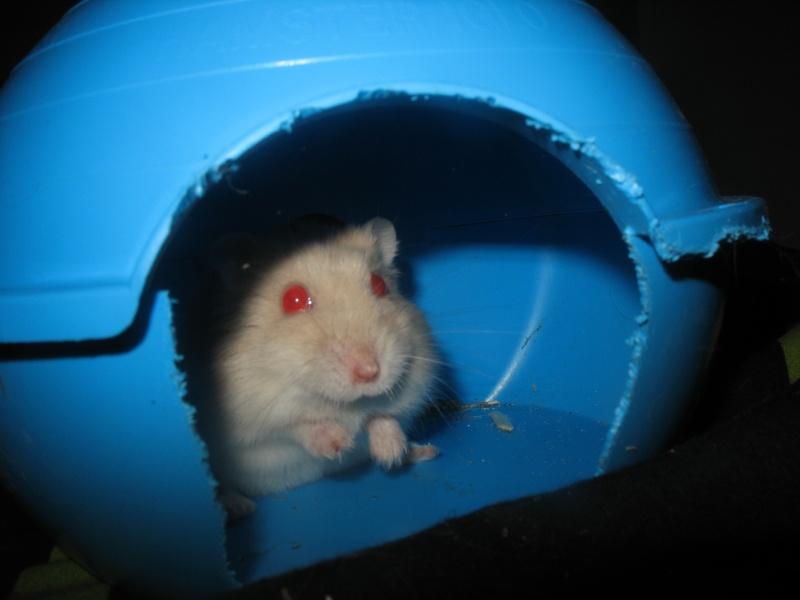 Perle, petite hamster Img_4412