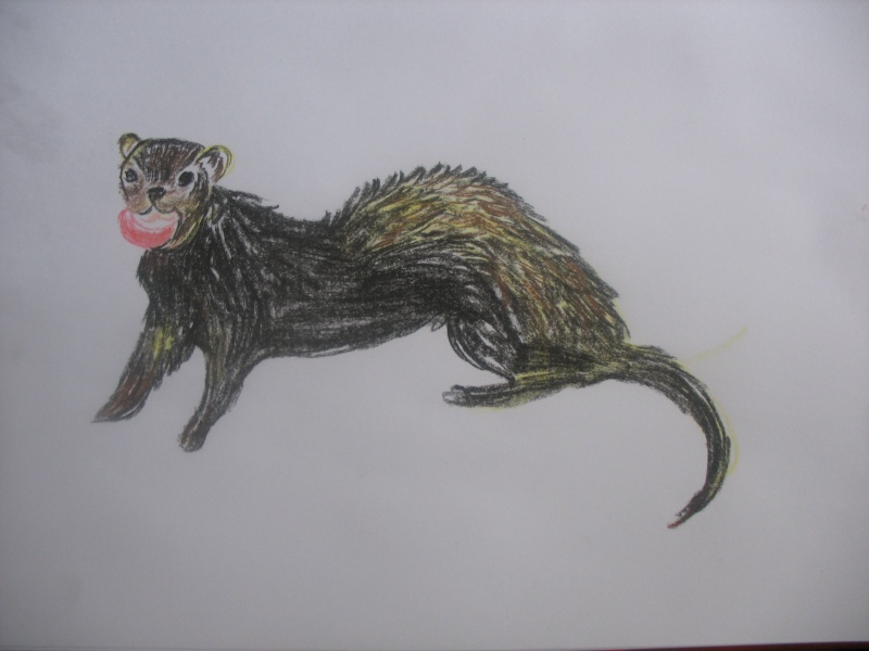 Réalise dessin, portrait, retouche photo Img_9511