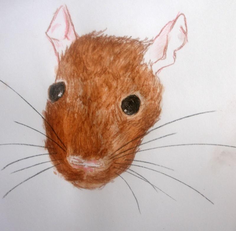 Réalise dessin, portrait, retouche photo Tete10